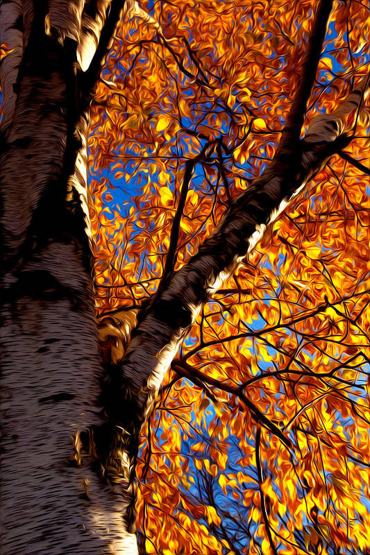 Autumn Art Print featuring the photograph Fall Leaves by Kristin Renbarger