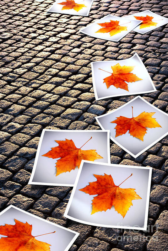 Abstract Art Print featuring the photograph Fallen Autumn Prints by Carlos Caetano