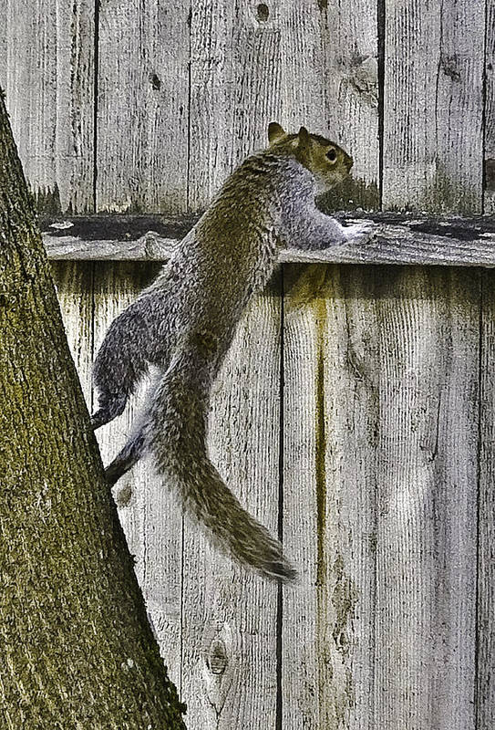 Idaho Art Print featuring the photograph Fast Squirrel by Grover Woessner
