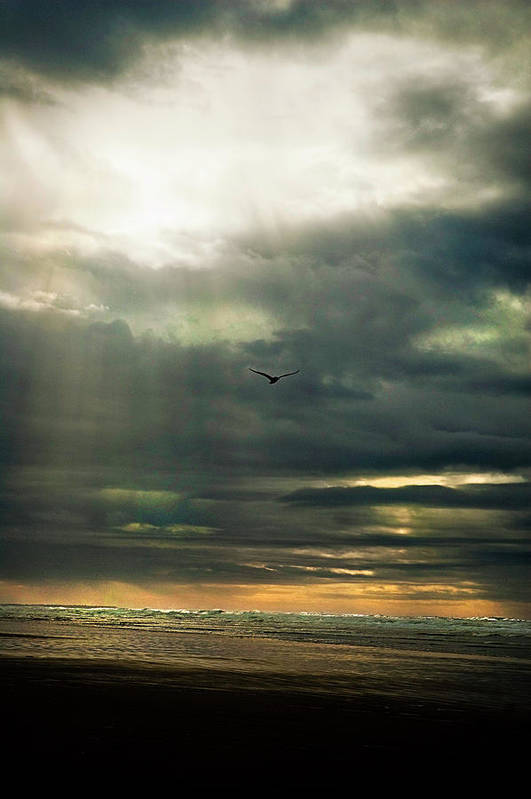 Seascape Art Print featuring the photograph Fly by Becky Thompson