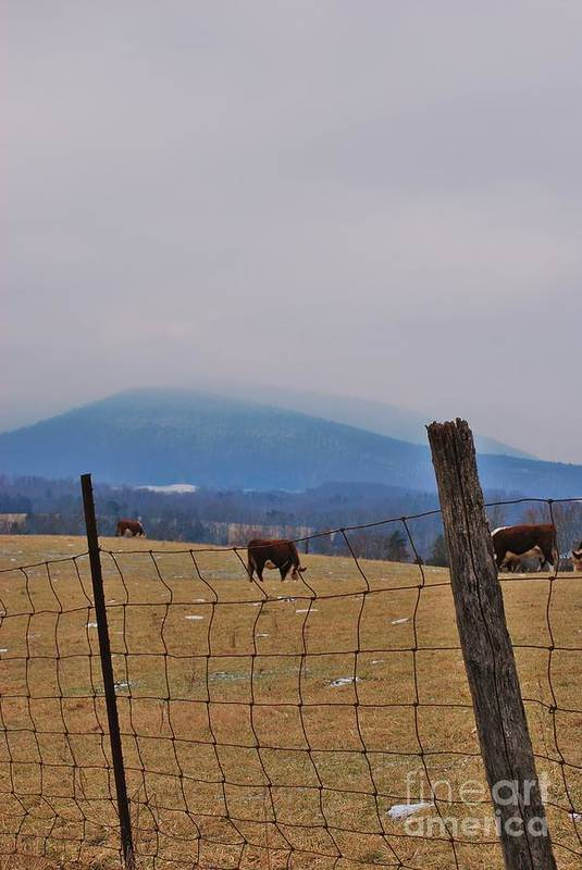 Art Print featuring the photograph Fogmtncows by TSC Photography Timothy Cuffe Jr