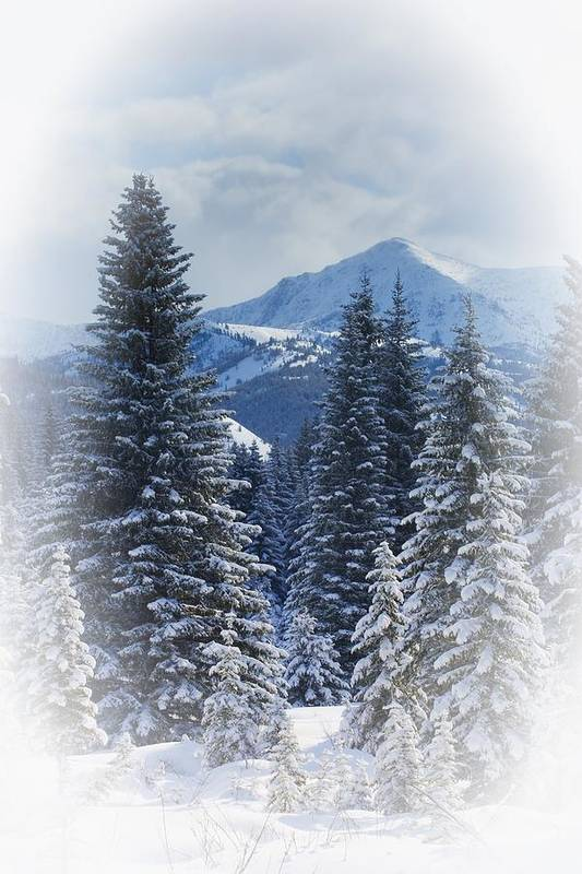 Breathtaking Art Print featuring the photograph Forest In The Winter by Carson Ganci