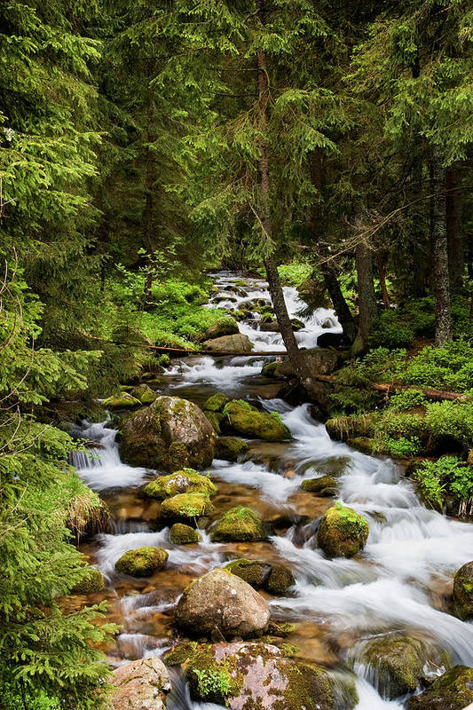 Beautiful Art Print featuring the photograph Forest Stream In Tatra Mountains by Artur Bogacki