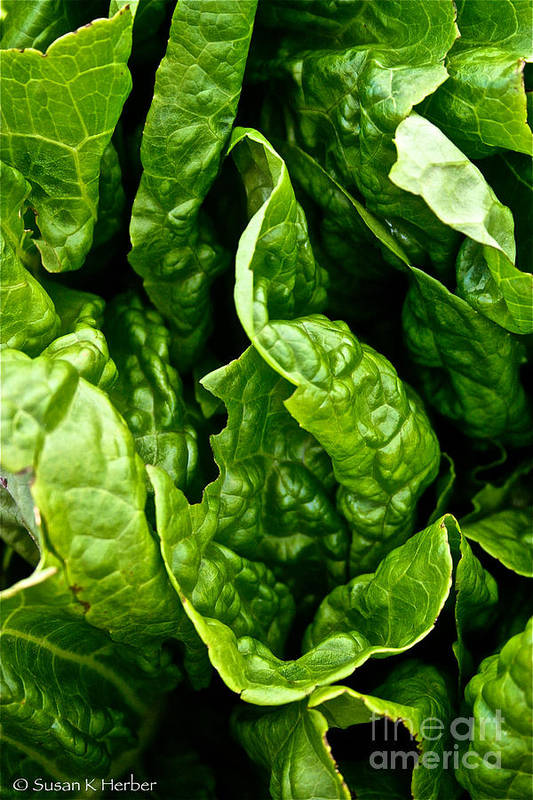 Food Art Print featuring the photograph Garden Fresh by Susan Herber