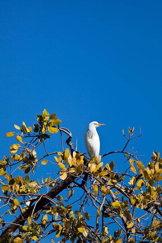 Egret Art Print featuring the photograph Great Egret On Watch by Michelle Constantine