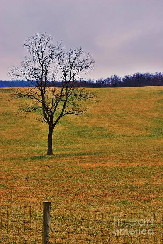Art Print featuring the photograph Greenfieldtree by TSC Photography Timothy Cuffe Jr