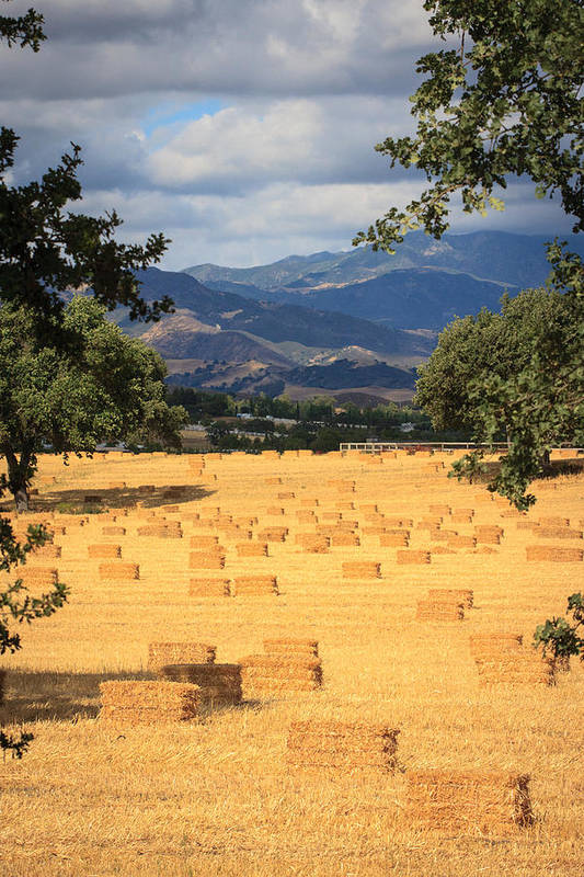Santa Ynez Art Print featuring the photograph Hay Field With Mountain Background by Dina Calvarese