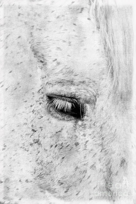 Animal Print featuring the photograph Horse Eye by Darren Fisher