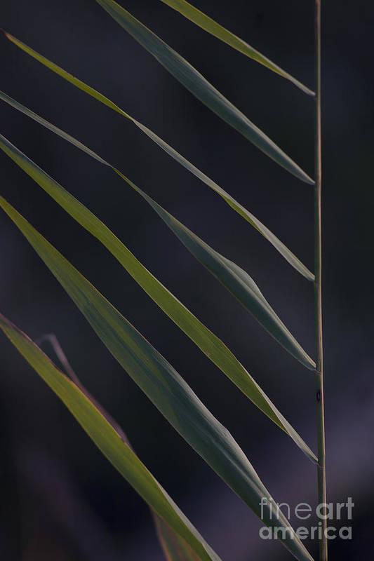 Nature Art Print featuring the photograph Just Grass by Heiko Koehrer-Wagner
