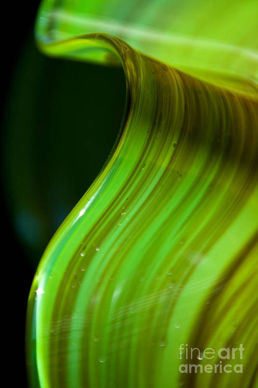 Lime Art Print featuring the photograph Lime Curl Ll by Dana Kern