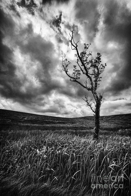 Ayrshire Art Print featuring the photograph Lone Tree On The Ayrshire Moors by John Farnan