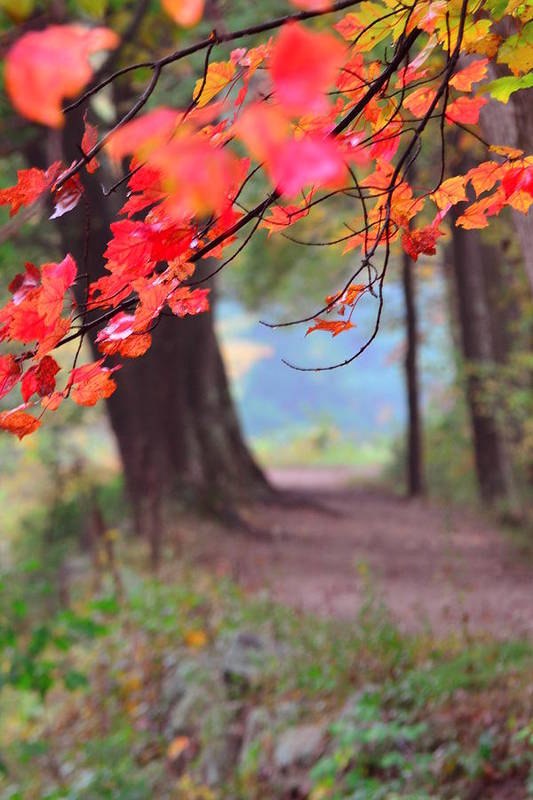 Fall Art Print featuring the photograph October Walk by Mandi Howard