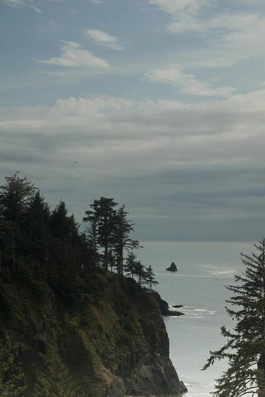 Oregon Art Print featuring the photograph Oregon Coast Trees 1 by Eva Jo Wu