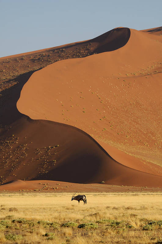 Gemsbok (oryx Gazella) Print featuring the photograph Oryx II by Christian Heeb