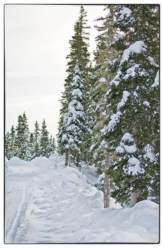 Mountain Art Print featuring the photograph Powdery Snow Path by Lisa Spencer