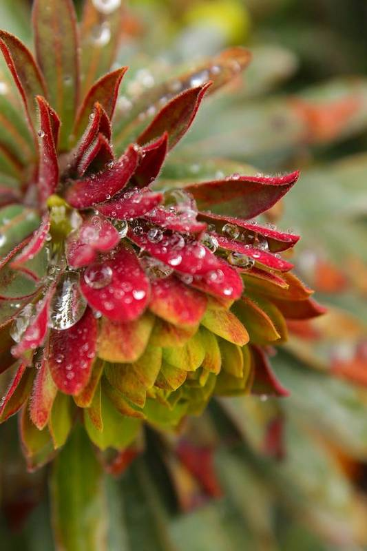Plant Art Print featuring the photograph Rain Drenched II by Beth Buelow