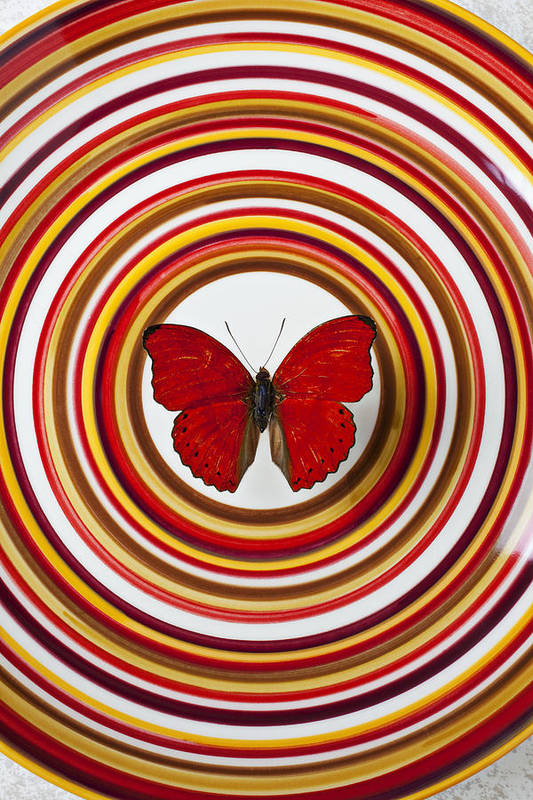 Red Butterfly Plate Circle Center Art Print featuring the photograph Red Butterfly On Plate With Many Circles by Garry Gay