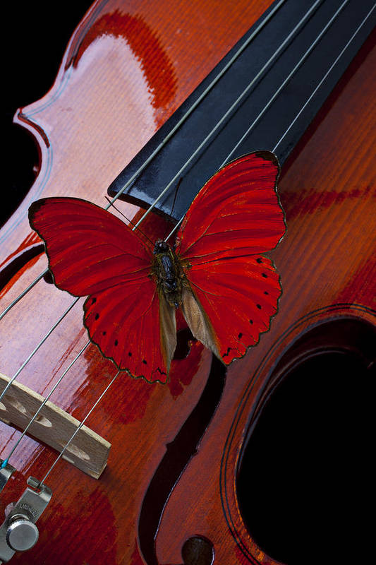 Red Print featuring the photograph Red Butterfly On Violin by Garry Gay