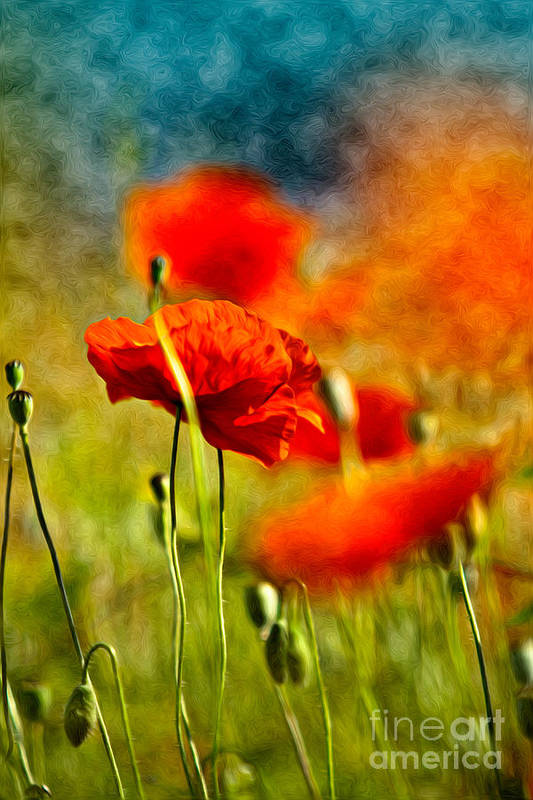 Poppy Art Print featuring the painting Red Poppy Flowers 01 by Nailia Schwarz