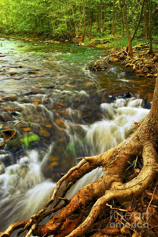 Water Art Print featuring the photograph River Rapids by Elena Elisseeva