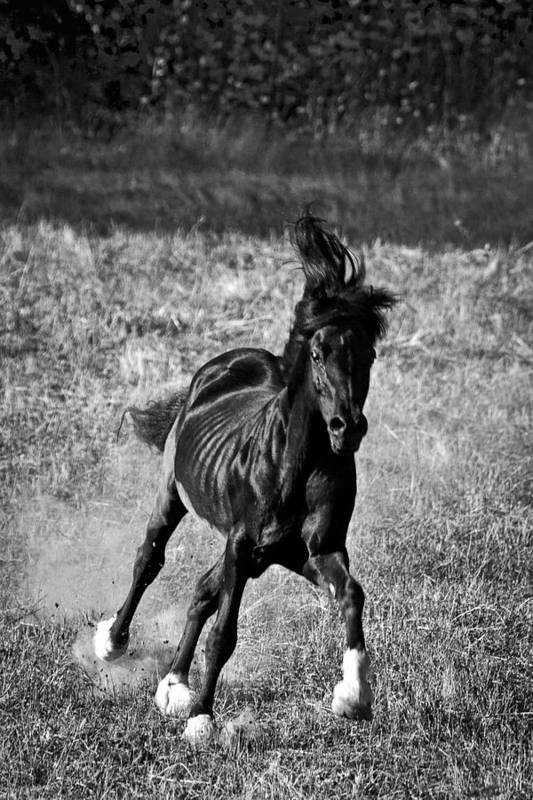 Running Free Art Print featuring the photograph Running Free by Wes and Dotty Weber
