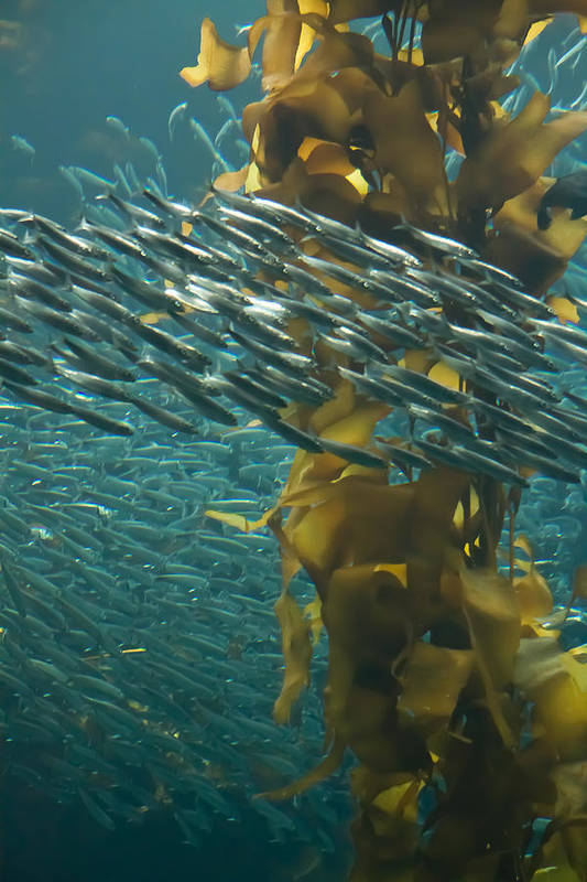 Seaweed Art Print featuring the photograph Rush Hour by Roger Mullenhour