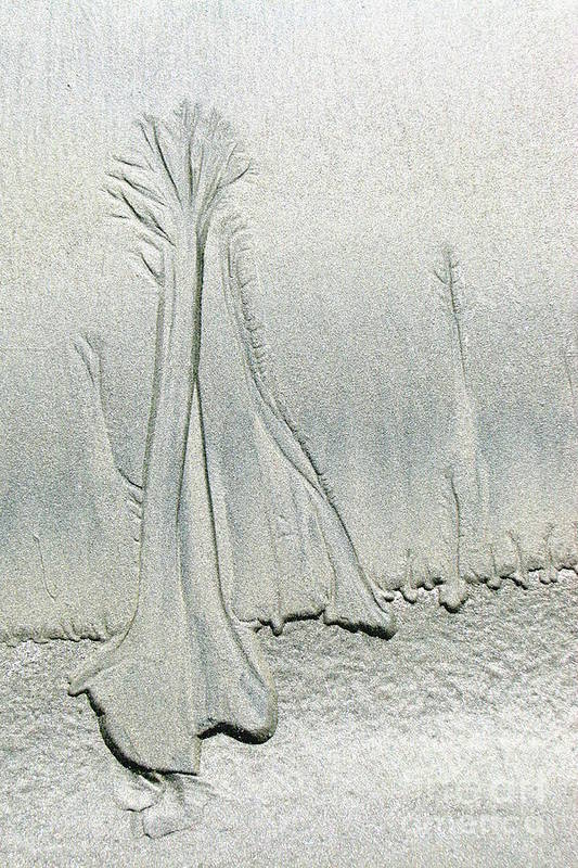 Beach Art Print featuring the photograph Sandy Trees by Frank Townsley