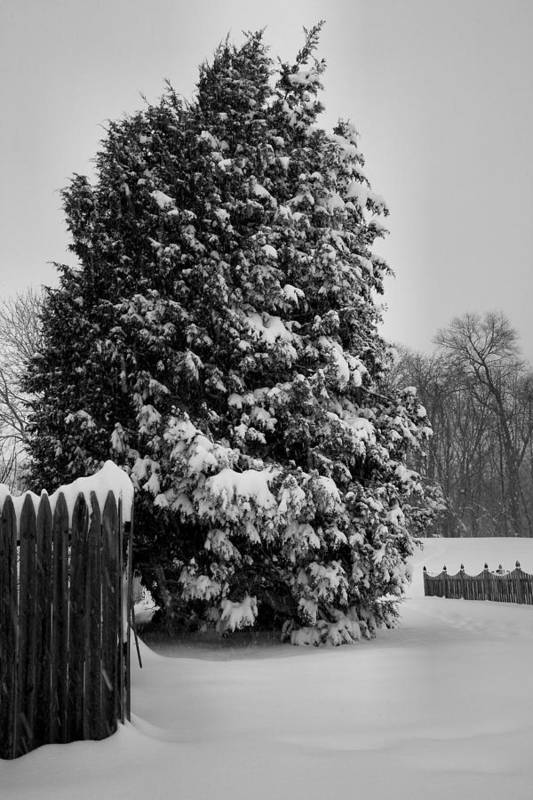 Snow Art Print featuring the photograph Season Of White by Steven Ainsworth