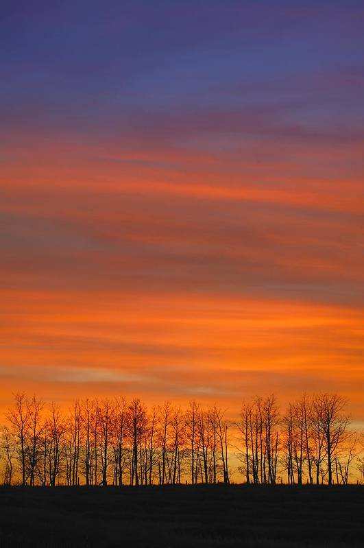 Hope Art Print featuring the photograph Silhouette Of Trees Against Sunset by Don Hammond