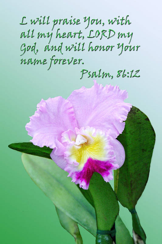 Religious Art Print featuring the photograph Single Pink Orchid Ps. 86v12 by Linda Phelps