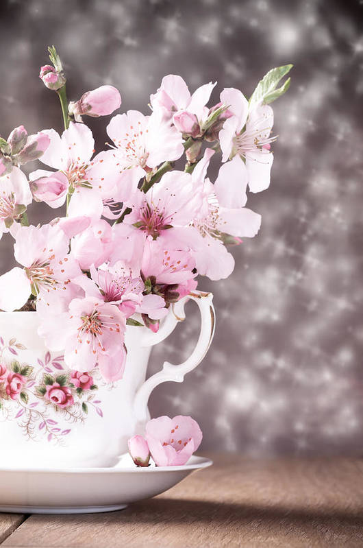 Cherry Art Print featuring the photograph Spring Blossom by Amanda Elwell