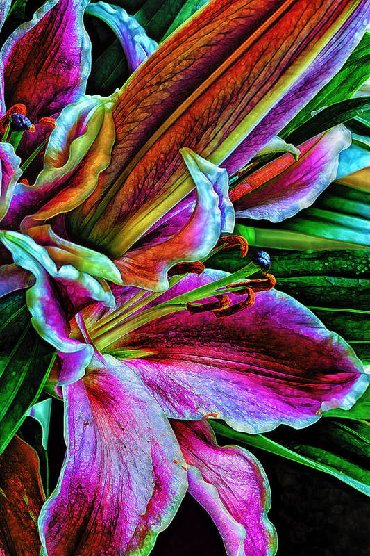 Flowers Print featuring the photograph Stargazer Lilies Up Close And Personal by Bill Tiepelman