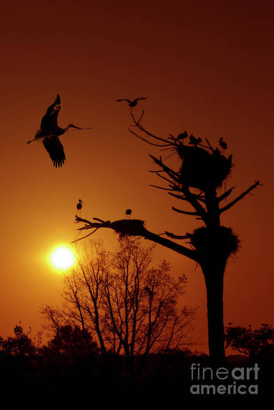 Stork Print featuring the photograph Storks by Carlos Caetano