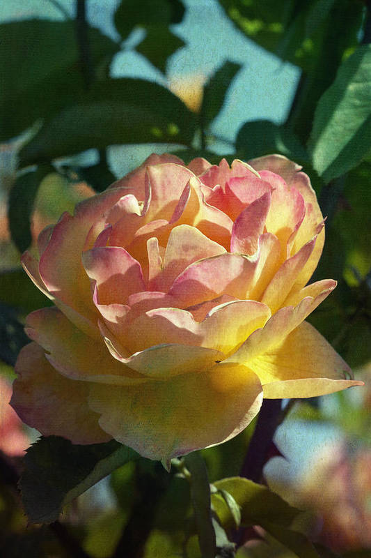 Photo Collage Art Print featuring the photograph Strike It Rich Rose by Linda Dunn