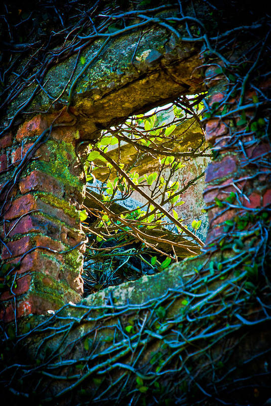 Window Art Print featuring the photograph Surreal by William Shevchuk