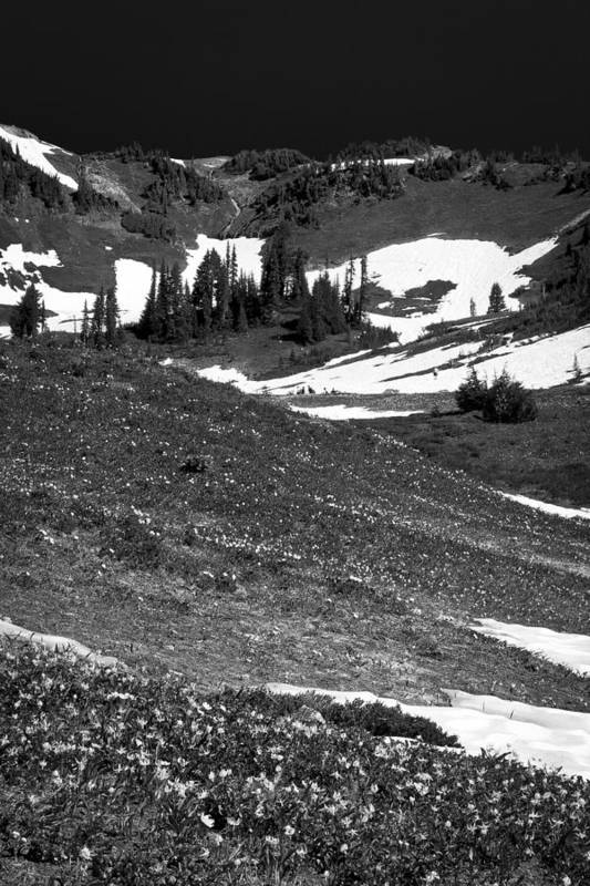 Mount Rainier Art Print featuring the photograph The East Slopes Of Mount Rainier II by David Patterson