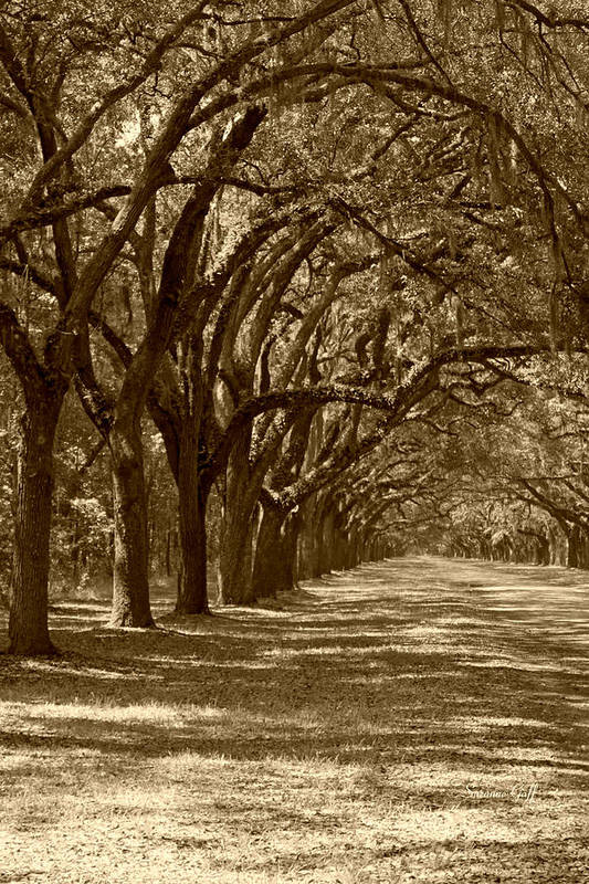 Fine Art Art Print featuring the photograph The Old South Series In Sepia by Suzanne Gaff