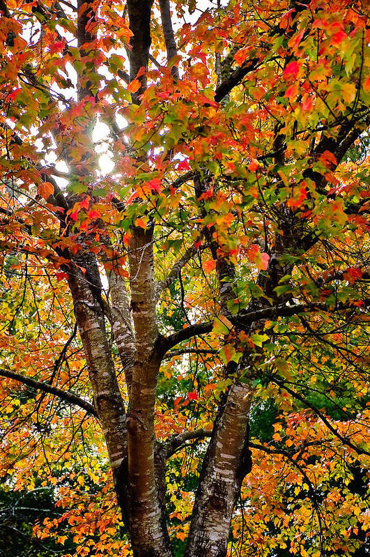 Tree Art Print featuring the photograph This Corner Of Autumn by Gene Hilton