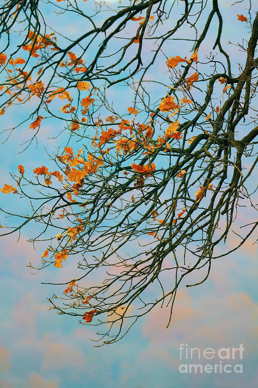 Autumn Landscape Art Print featuring the photograph Tree Branches In Autumn by Gabriela Insuratelu
