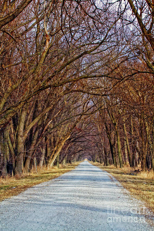 Trees Art Print featuring the photograph Tree Lined Lane by Carolyn Fox