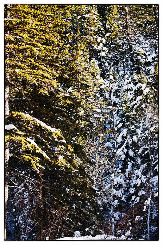 Nature Art Print featuring the photograph Trees In Taos Village by Lisa Spencer