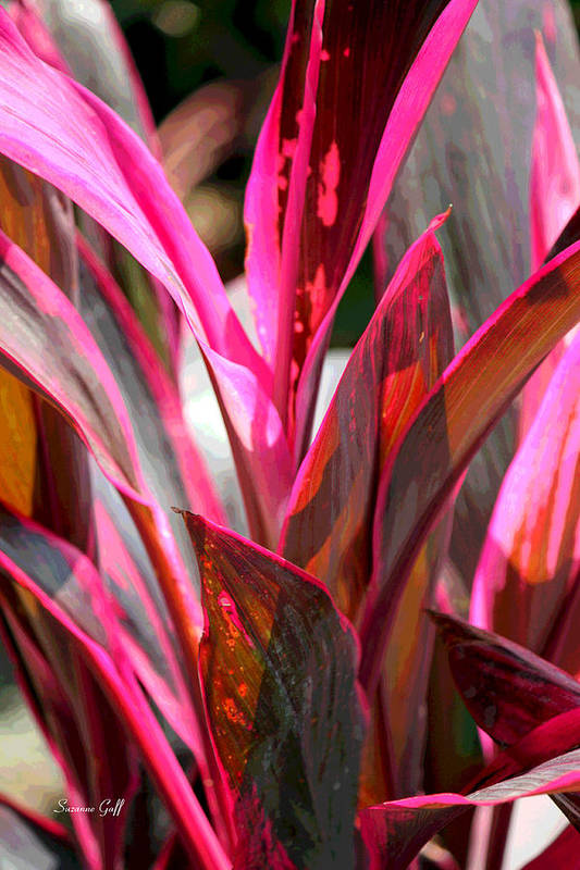 Tropical Art Print featuring the photograph Tropical Vision II by Suzanne Gaff