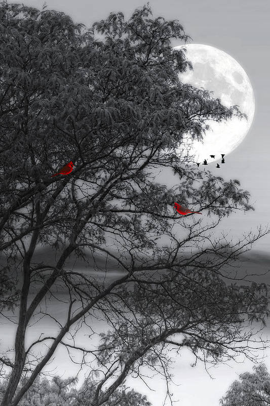 Nature Art Print featuring the photograph Two Cardinals In The Moonlight by Tom York Images