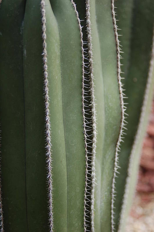 Art Print featuring the photograph Warm Cabo Cactus Before by Paula OReilly