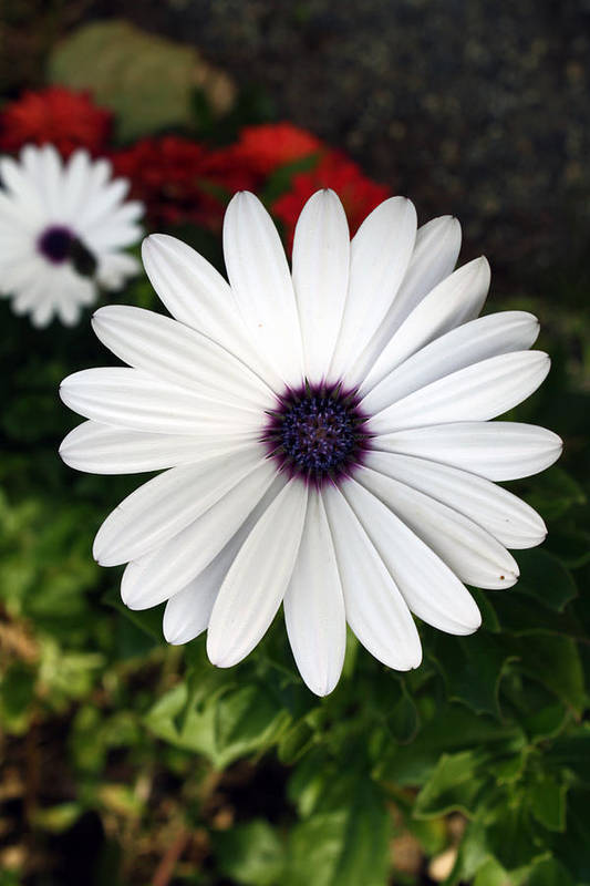 Flower Art Print featuring the photograph White Flower by Leah Green