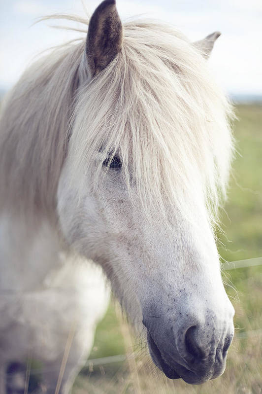 Vertical Art Print featuring the photograph White Horse by copyright by Elena Litsova Photography