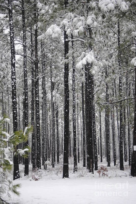 Snow Art Print featuring the photograph Winter Forest by Clifton Fomby