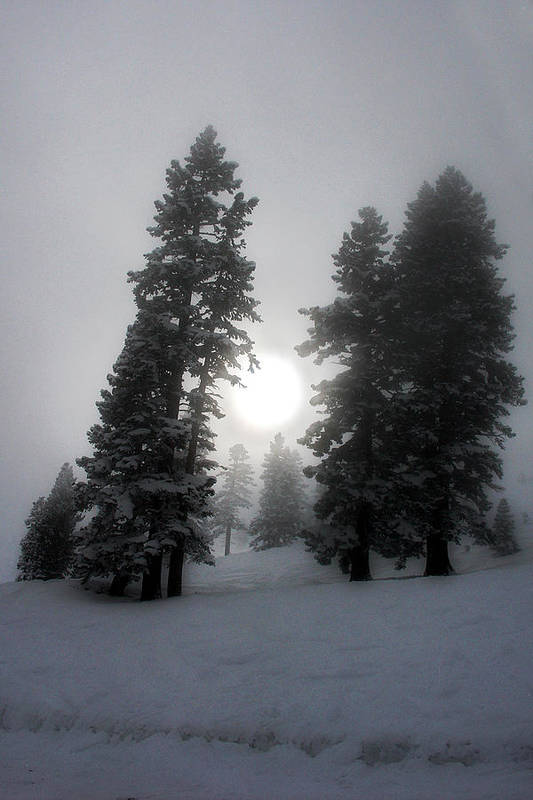 Trees Art Print featuring the photograph Winter Sun by Alex Lemus