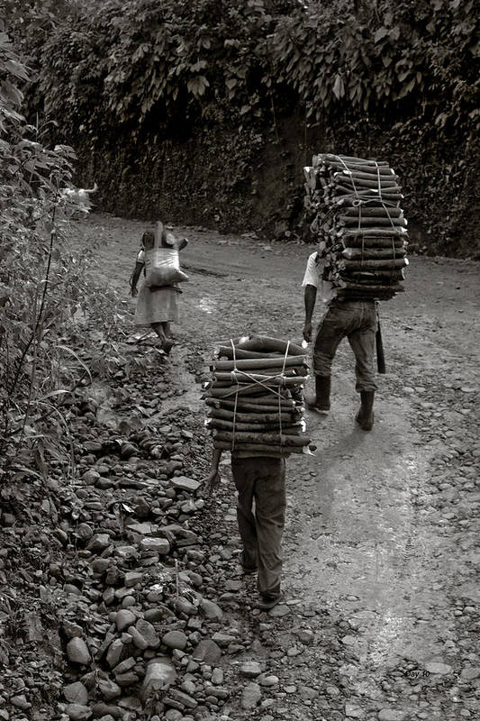 Wood Carry Carrier Woodcarrier Guatemala Art Print featuring the photograph Woodcarriers In Guatemala by Day Williams
