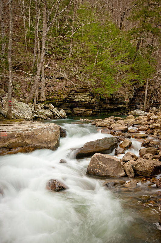 Landscape Art Print featuring the photograph Woodland Creek by Marion Wear